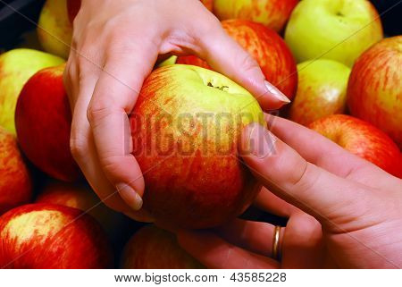 Apple From Hand To Hand
