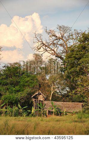 Treehouse on a farm