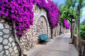 stock photo of southern  - Vibrant flower draped pathway in Capri - JPG