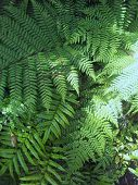 Nature Green New Zealand Fern