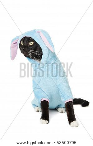 Black Cat In A Bunny Suit