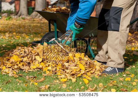 Man Raking The Leaves