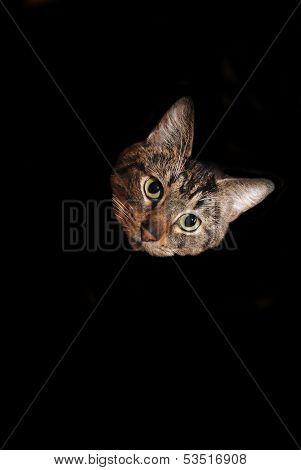 Cat Head Over Black