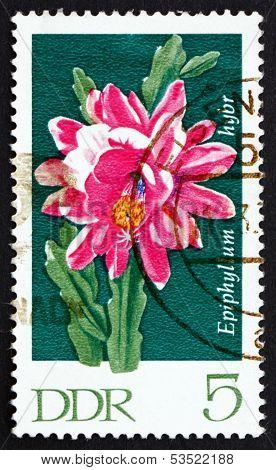 Postage Stamp Gdr 1970 Epiphyllum, Flowering Cactus Plant