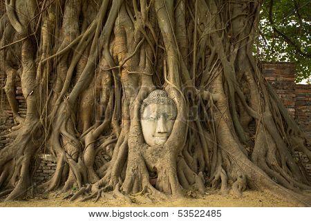 The Head of Buddha in Wat Mahathat, Ayutthaya, Thailand.