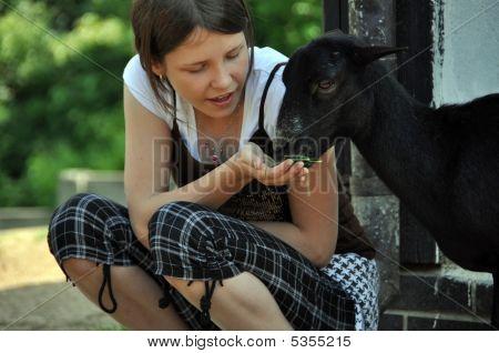 Little Mädchen Fütterung Ziege