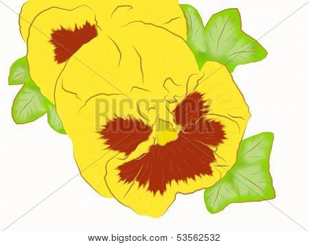 Yellow pansy.