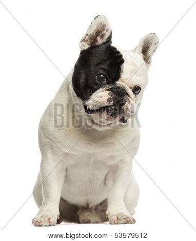 French bulldog sitting, looking at the camera, isolated on white