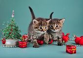 image of mew  - Small kittens among Christmas stuff . Studio shot.