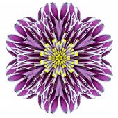 picture of kaleidoscope  - Kaleidoscopic Chrystanthemum Flower Mandala Isolated on White Background - JPG