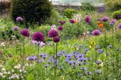 stock photo of english cottage garden  - A colourful cottage garden in early summer - JPG
