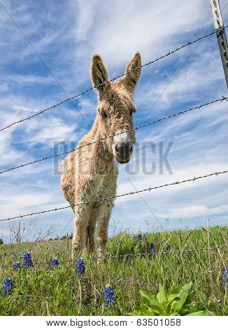 Donkey On Spring Pasture