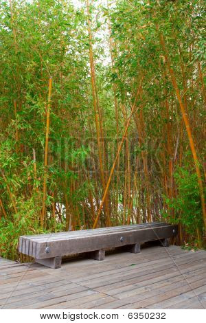 Bamboo Forest In A Park
