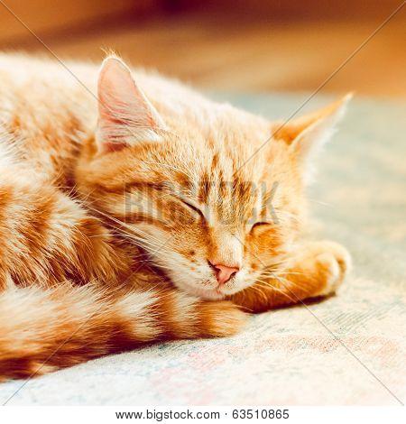 Little Red Kitten Sleeping On Bed
