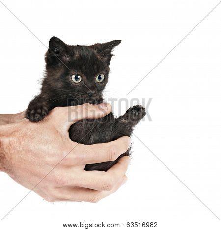 little cat on hands