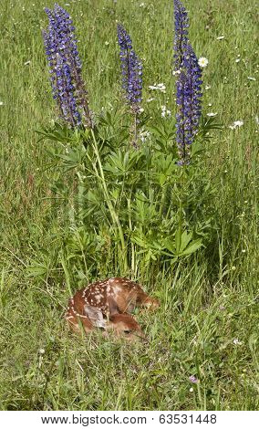Sleepy Fawn in Wildflowers
