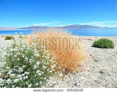 Plants on White Sand Blue Lake