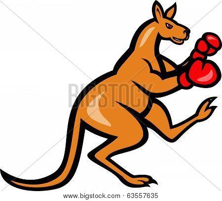 Kangaroo Kick Boxer Boxing Cartoon