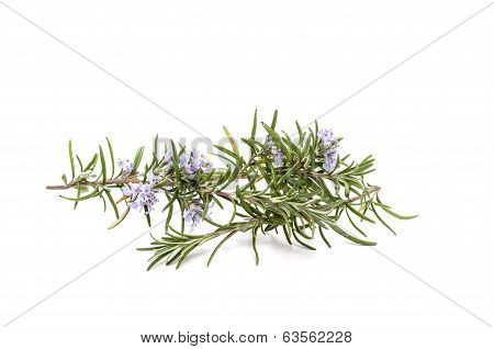 Rosemary With Flowers