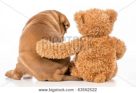 best friends - dog and teddy bear with arm around each other from behind