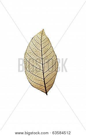 Single dried leaf showing vein pattern