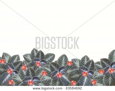 Flowers And Leaves Border