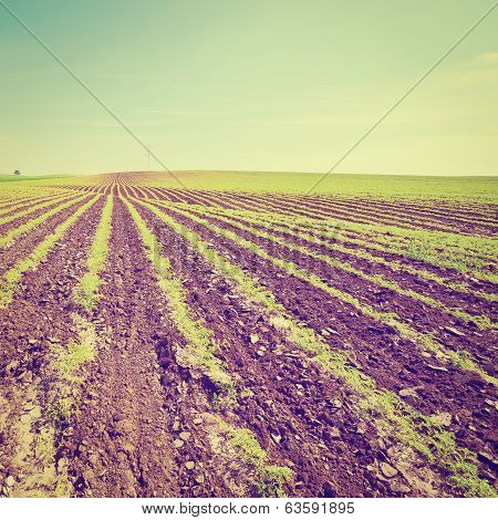Fields In Israel