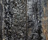 pic of tar  - close up detail of tar on electricity pole  - JPG