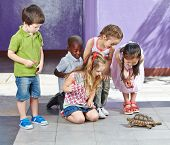 Interracial group of children in petting zoo looking at a turtle