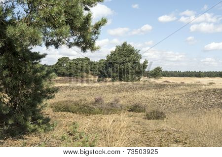 Landscape In National Park Hoge Veluwe.