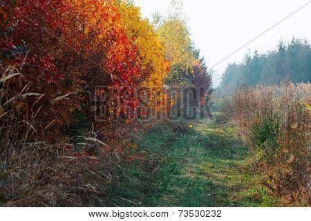 Autumn colors in nature