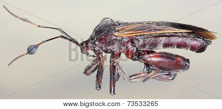 A Close Up Of An Assassin Bug