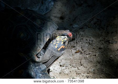 Two Tortoises Kissing In A Cave
