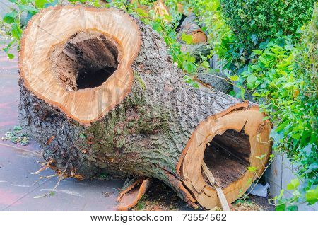 Hollowed-out Tree Trunk