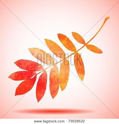 Orange watercolor painted vector rowan tree leaf
