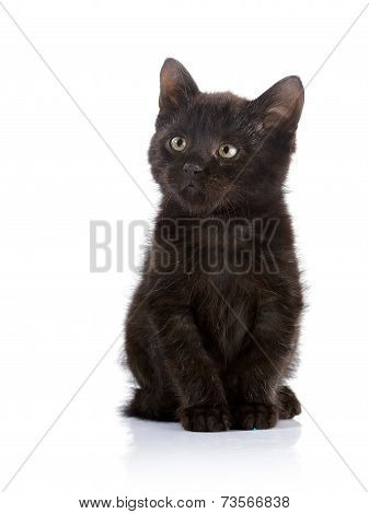 Small Black Cat.