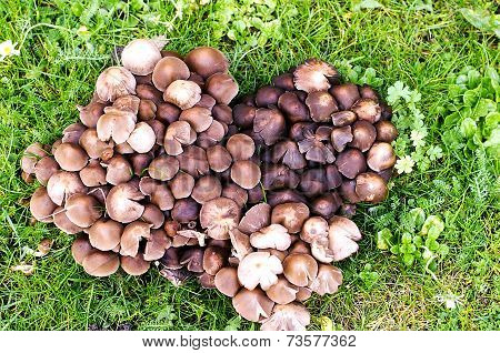 Heart Of Mushrooms