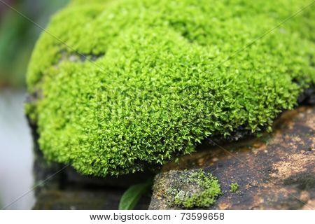 Green moss in rock