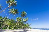 stock photo of samoa  - Tropical Samoa with white sandy beaches and coconut palms - JPG