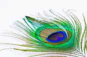 image of feathers  - peacock feather macro - JPG