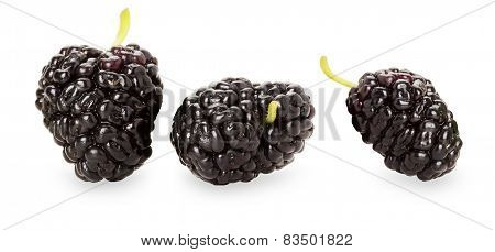 Black Mulberry On The White Background