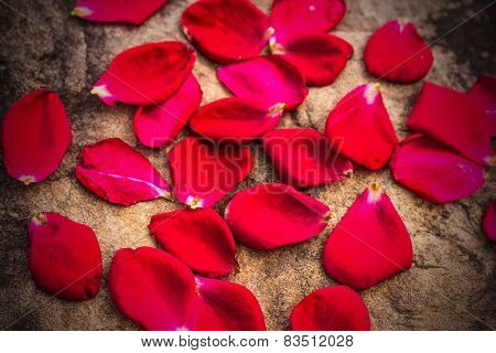 Rose Petals On The Rocks