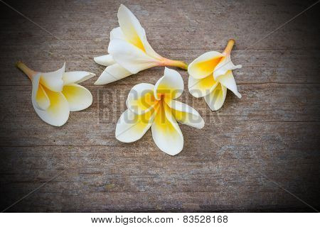 Plumeria Flowers On The Rock