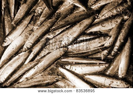 Raw Smelts