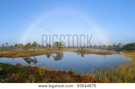 White rainbow in the bog