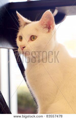 Backlit White Cat Sitting