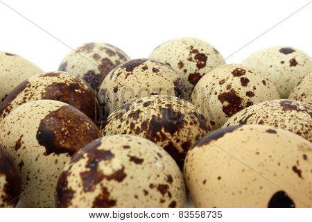 Brown Spotted Quail Eggs