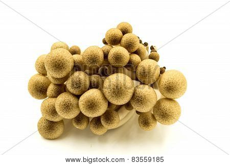 Shimeji Mushrooms On White Background.