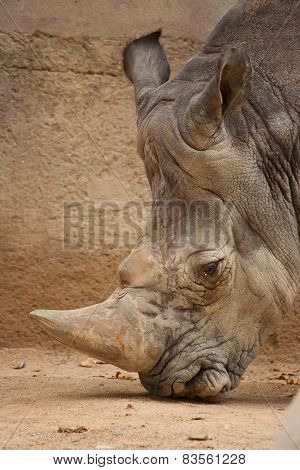 A Close Up Photo Of A Rhino's Head, Horn And Eye