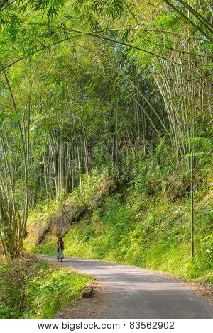 Exploring Lush Green Bamboo Forest